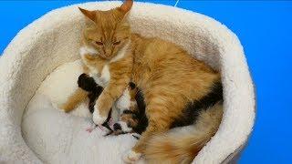 Сколько Мурка котят родила в Коробке от CHUPA CHUPS?
