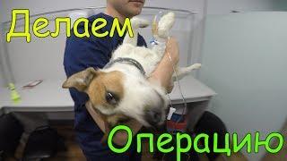 ВЛОГ Делаем Собаке Операцию а Коту снимаем Швы Женя плачет Спасение  про Котят и Собак