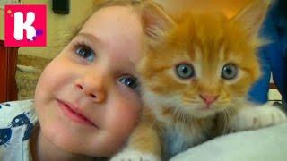 Кошка Мурка питомец Кати и Макса  покупаем все необходимое для кошек Kittie care cat pets sets