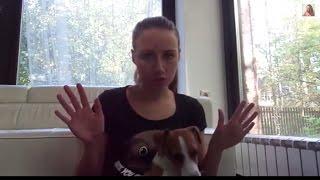 Собака одна дома. Видео со скрытой камеры. Мой опыт. Советы кинолога. Джина грызет носки