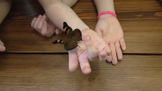 Бабочки день 2 появилась первая бабочка.