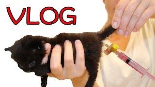 VLOG Спасение котенка Как сделать клизму котенку Маленькие котята  про котят ВЛОГ