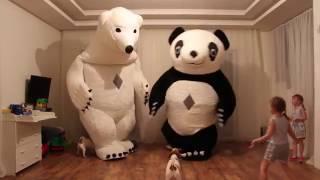 Панда и Белыи медведь пришли к нам Игрушка большои медведь и Кунг фу панда устроили Животныи мир