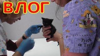 Влог Котенок сильно заболел Везем котенка к врачу Маленькие котята  про котят
