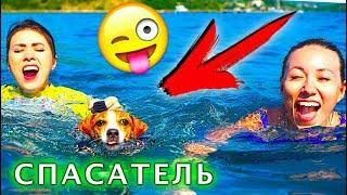 Собака Джина СПАСАТЕЛЬ ПЛАВАЕТ В ЖИЛЕТЕ ПЕРВЫЙ РАЗ - Elli Di Pets