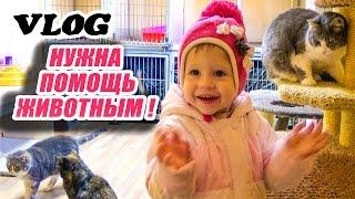 VLOG: Спасаем животных Едем в приют кошечек и собачек Saving cats and dogs