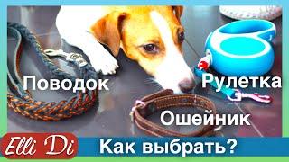 Рулетка, ошейник, поводок для собак  Покупки из зоомагазина