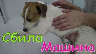 ВЛОГ Нашу Собаку сбила машина Водитель уехал Мама сильно плачет Спасение Операция
