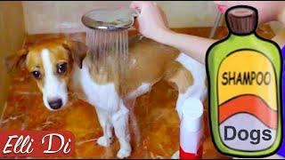 Как мыть собаку или как помыть щенка?  Уход за собакой