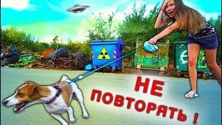 Мной управляет Собака Джина выгуливает меня Играем - Elli Di Pets