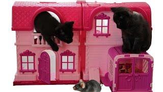 ВЛОГ Маленькие котята выросли Капаем глазки и лечим котят видео Про котят Игры котят