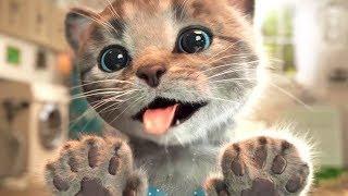 Смешной котенок играет