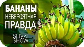 Невероятная правда о бананах SLIVKI SHOW