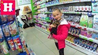 САЛОН КРАСОТЫ ДЛЯ МАЙКЛА  Секреты ухода за йорком  Beauty saloon for Dog  Yorkshire Terrier