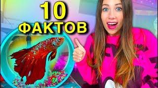 Теперь Немо Красный 10 Фактов о моей Рыбке Мой Аквариум  Elli Di Pets