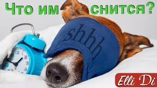 МОЯ СОБАКА СПИТ. ИНТЕРЕСНЫЕ ФАКТЫ про собак от Elli Di