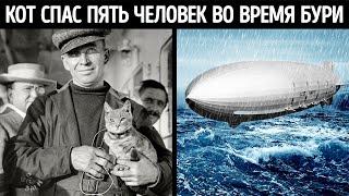 История о самом невероятном коте, спасшем судно во время бури