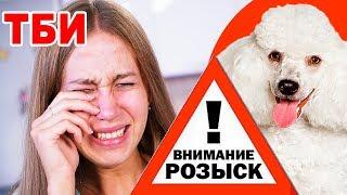 ОНИ ПОХИТИЛИ МОЮ СОБАКУ ТБИ - 10 серия