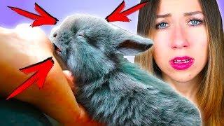 Спасаю слепого кролика. Открываем глазки? ПЯТЬ КРОЛЬЧАТ.