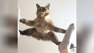 Funny Cats - Hardest Try Not To Laugh Challenge 2019