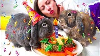 Первый День Рождения Кролик Лизун и Эльза едят торт - Elli Di Pets