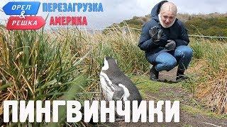 Пингвины Ушуайи Орёл и Решка. Перезагрузка. АМЕРИКА