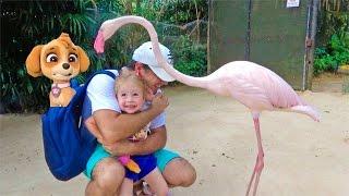 ВЛОГ: На нас НАПАЛ фламинго Настя Очень испугалась в зоопарке вместе со Скай Щенячий патруль