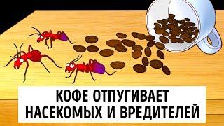 Как избавиться от муравьев в доме раз и навсегда