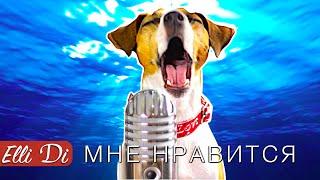 Егор Крид - Мне нравится  СОБАКА ДЖИНА ПОЁТ